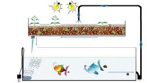 Skizze eines aquaponischen Systems