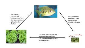 Prinzip des Stoffkreislaufs der Aquaponik